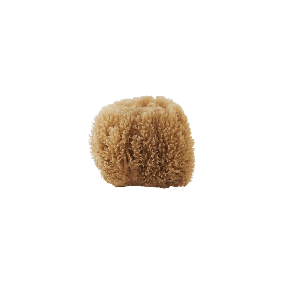 Meraki Sponge