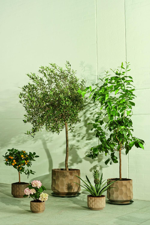 Kähler Gro urtepotteskjuler, 26,5 cm, sand