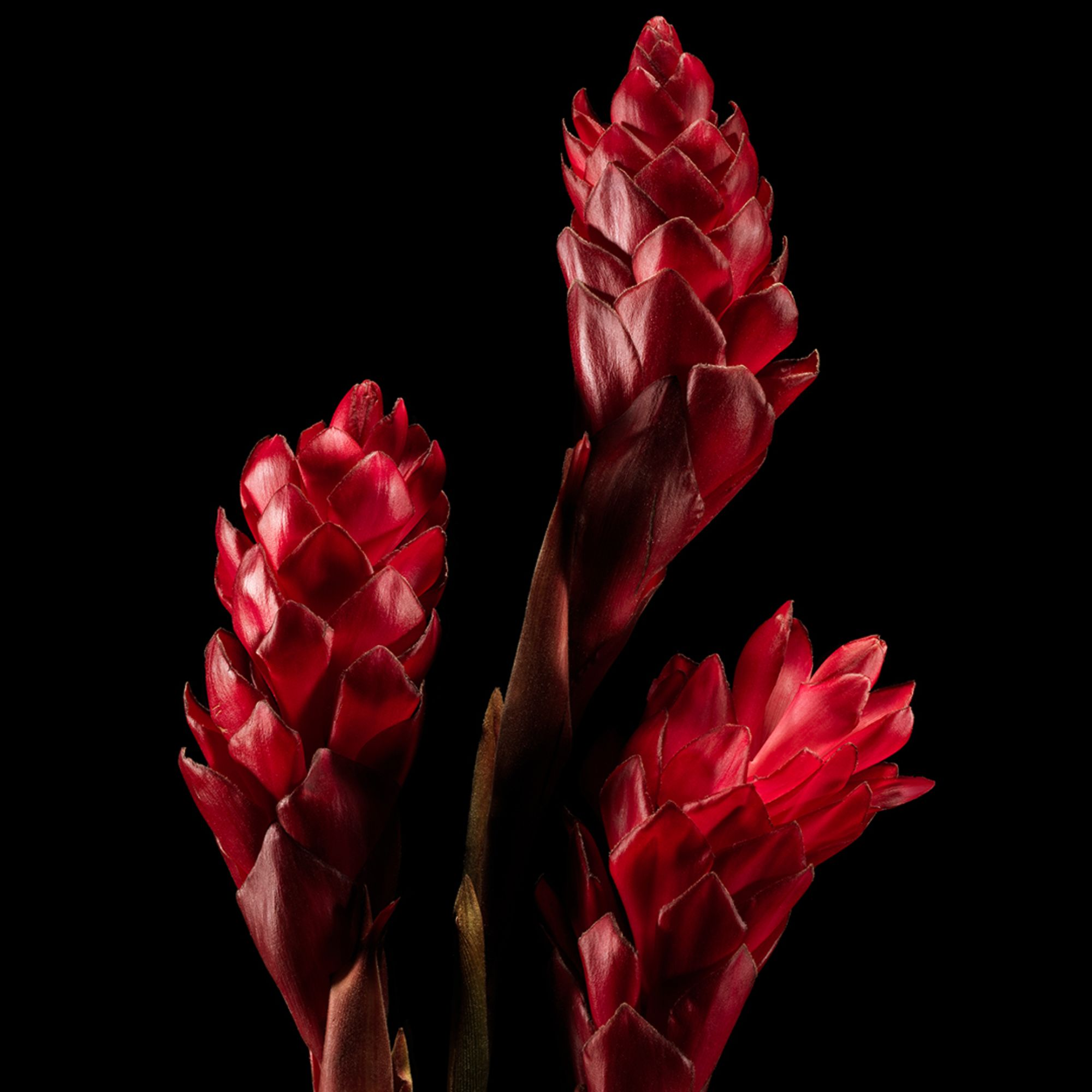 Ralph Lauren Polo Red EDP, 40 ml
